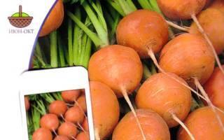 Семена моркови: лучшие сорта для открытого грунта в подмосковье, сибири, средней полосе россии