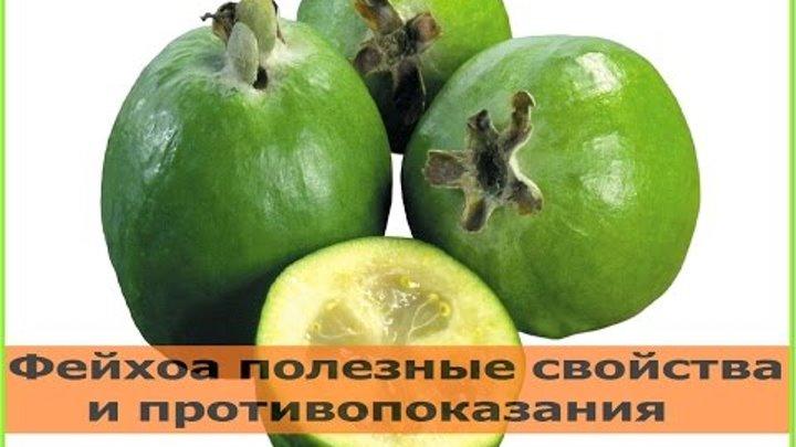 Фейхоа: полезные свойства и противопоказания, как приготовить и есть
