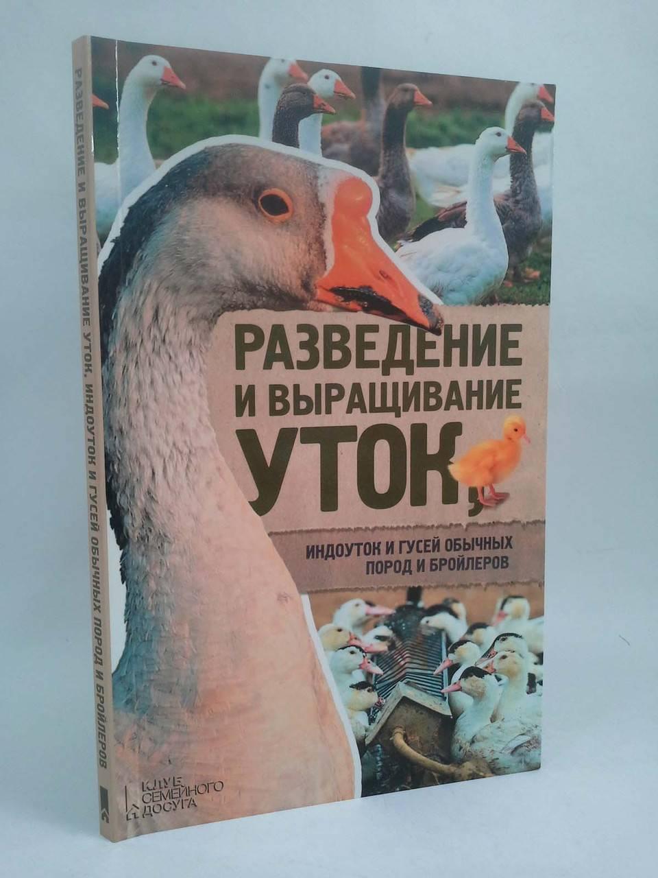 Утка кросса темп: белорусская бройлерная — описание породы, выращивание, питание и содержание птицы