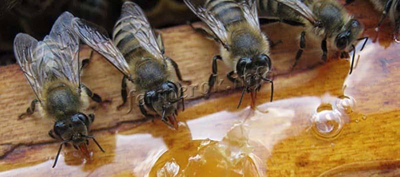 Как подкормить пчел осенью   практическое пчеловодство
