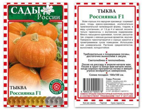 Выращивание холодостойкой тыквой сорта россиянка