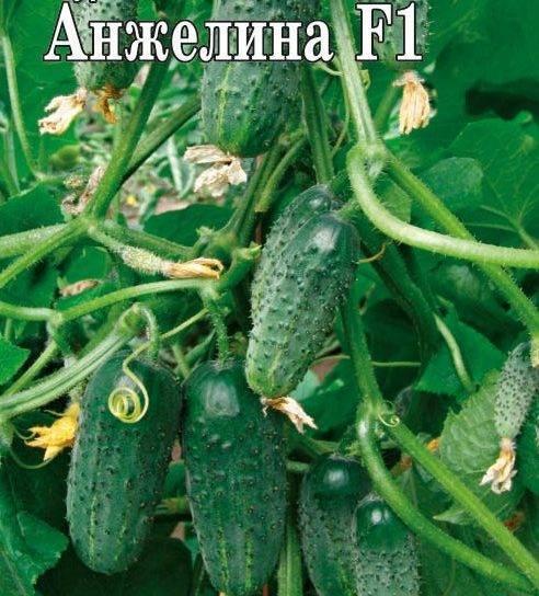 Описание лучших семян огурцов и рейтинг самых урожайных сортов на 2020 год