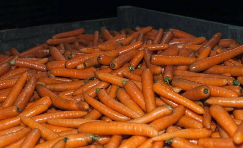 Характеристика и описание моркови сорта нантская