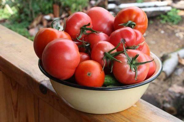 Лучшие сорта помидор для теплицы из поликарбоната