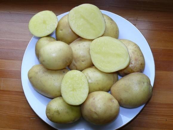 Картофель маделина описание сорта
