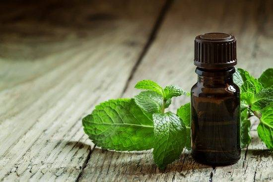 Свойства и применение эфирного масла мяты