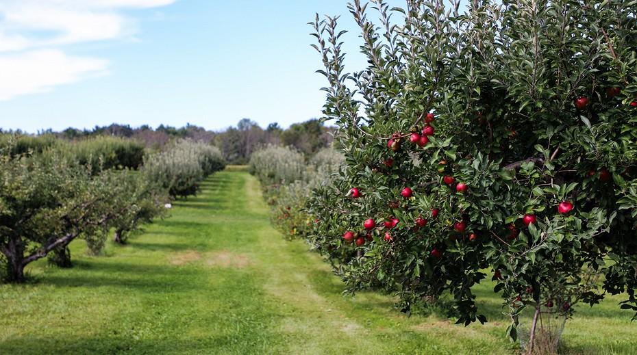 Как ухаживать за вишней весной и осенью: подробная инструкция