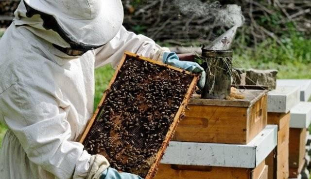 Золотые горы — это о пчеловодстве