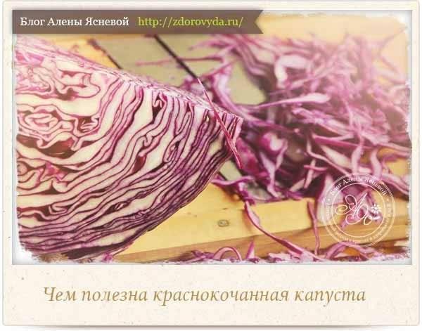 Красная капуста: виды, польза и вред для организма человека, химический состав, способы приготовления