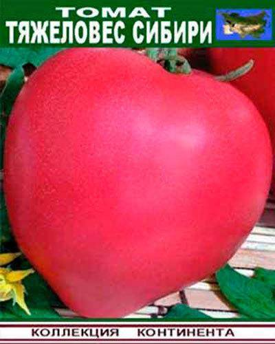Особенности томата тяжеловес сибири - характеристика и описание сорта, полезные советы, отзывы и правила выращивания