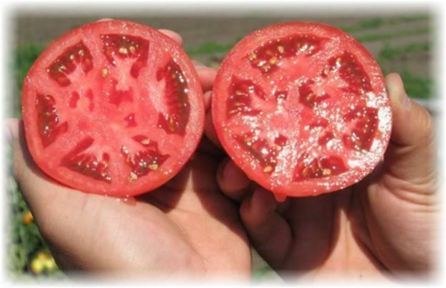 Как сделать семена томатов из своих помидоров