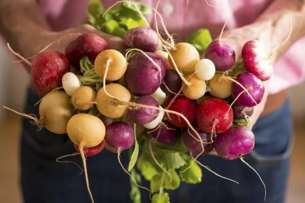Редис черриэт f1: описание сорта, фото, отзывы, как и когда сажать, выращивание в теплице, видео