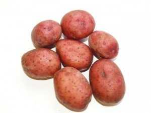 Картофель любава: почему он достоин внимания огородников