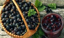 Свойства черной и красной смородины: польза и вред для здоровья