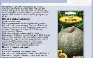Тыква «россиянка»: характеристики сорта, фото, выращивание, отзывы