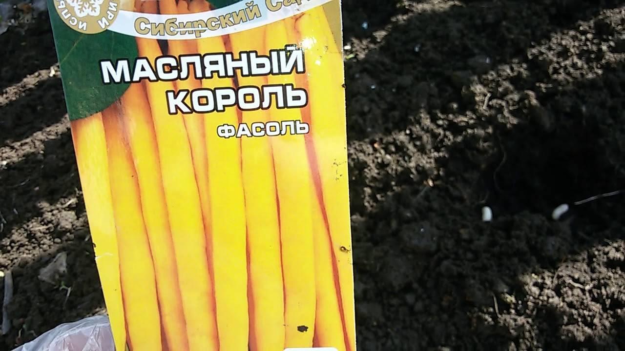 Фасоль масляный король выращивание