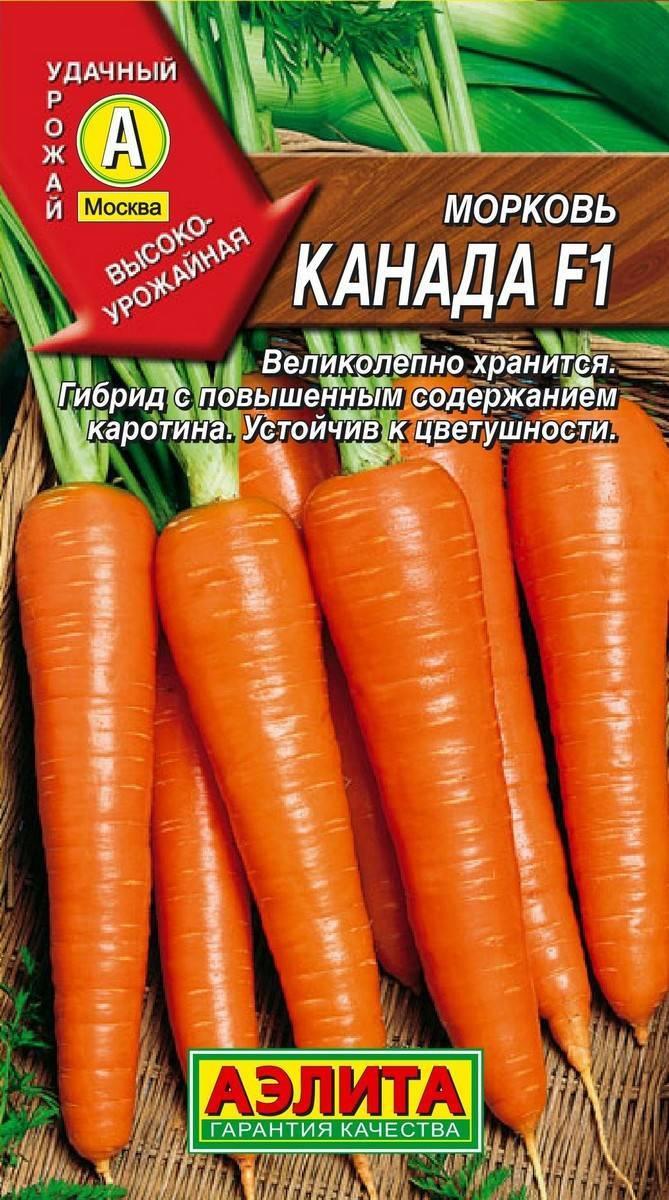 Морковь нандрин f1 — описание сорта, фото, отзывы, посадка и уход