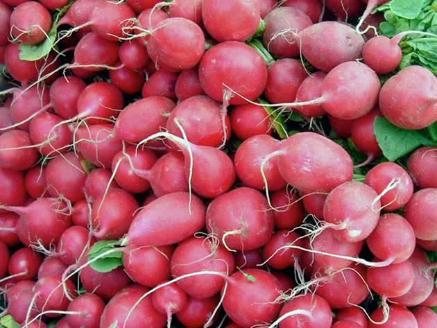 Чем подкормить редиску для быстрого роста корнеплода?