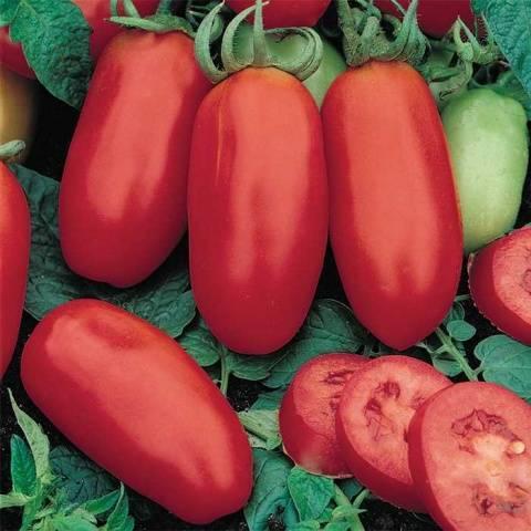Как вырастить вкусные и необычные по форме томаты сорта банан