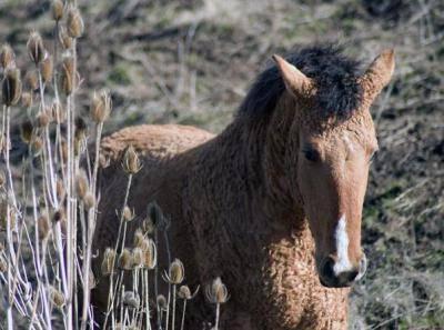 Татарские лошади: описание и содержание