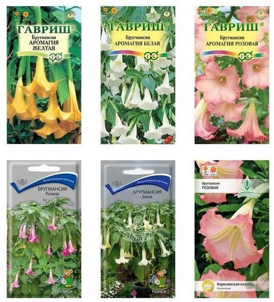 Бругмансия (38 фото): описание, посадка и уход за цветком в домашних условиях и в открытом грунте. выращивание из семян