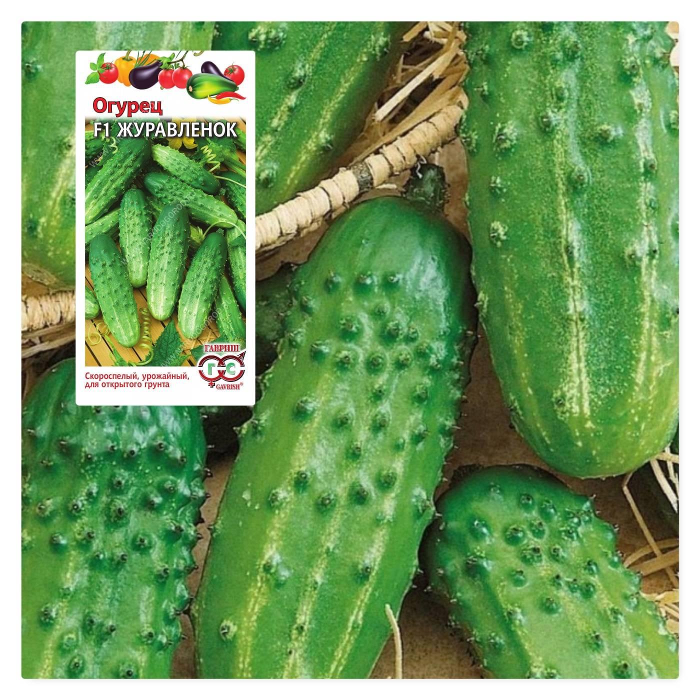 Огурец хрустишка f1: отзывы и фото, описание сорта, как выращивать рассаду
