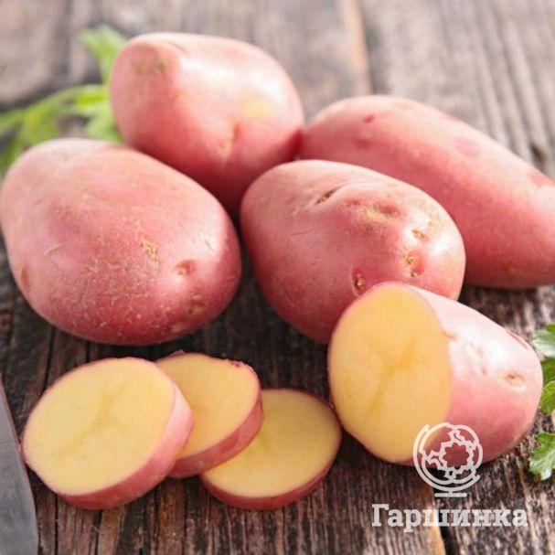 Картофель ажур: разбираемся подробно