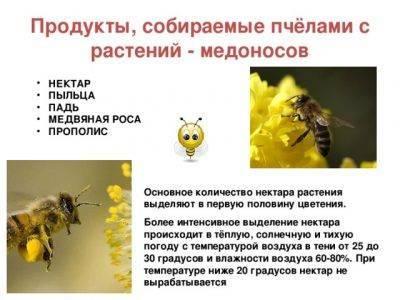 Как и когда собирать пыльцу у пчел правильно | практическое пчеловодство
