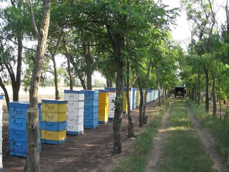 Разновидности препаратов для пчёл и их применение