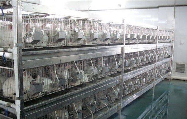 Размеры промышленных клеток для кролика