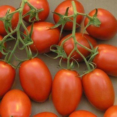 Лучшие сорта томатов для открытого грунта