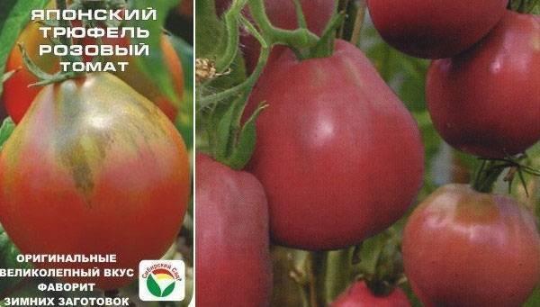 Томат агата — описание сорта, урожайность, фото и отзывы садоводов