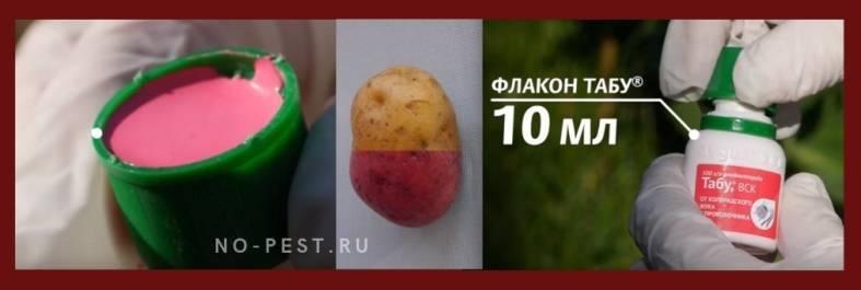 Табу – надежный защитник картофеля от колорадского жука