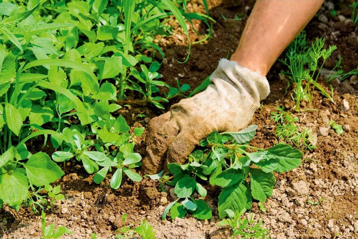 Борьба с сорняками народными средствами