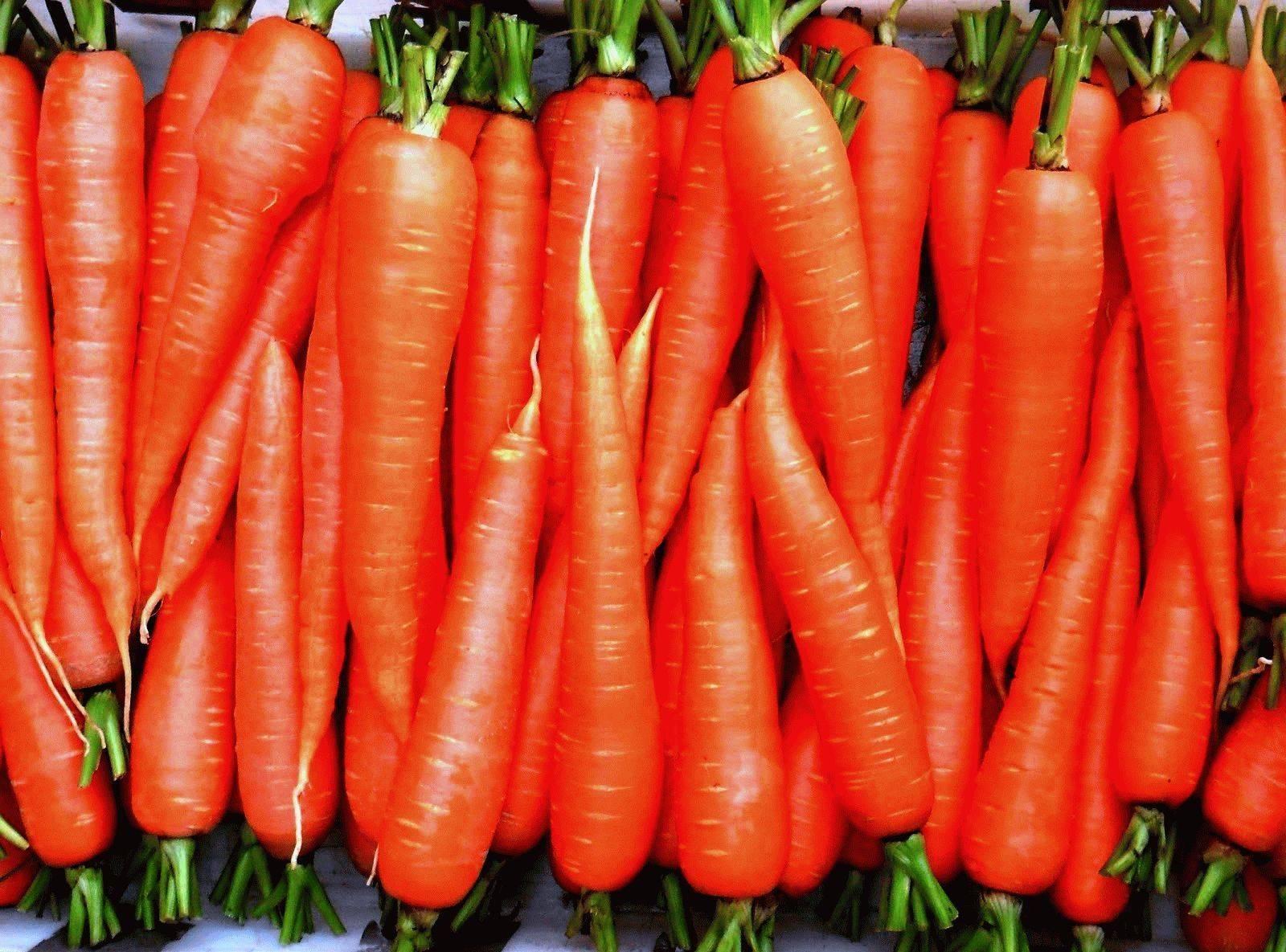 Посадка моркови в 2020 году по лунному календарю: благоприятные дни на рассаду, сроки посева весной, осенью и зимой