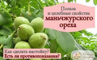 Маньчжурский орех – лечебные свойства и противопоказания - общая информация - 2020
