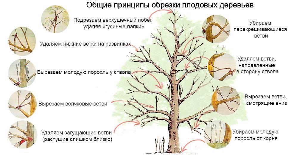 Весенняя посадка деревьев и кустарников: как и когда сажать
