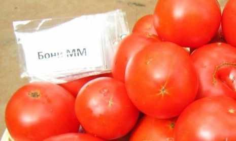 Томат «бони мм»: характеристика и описание сорта, особенности выращивания и ухода