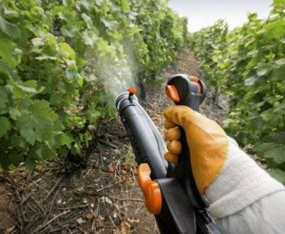 Применение фунгицида кабрио топ для винограда и томатов