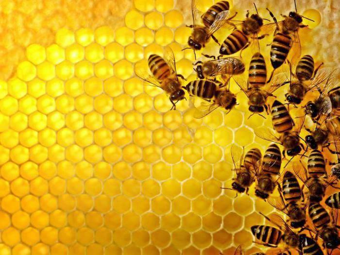 Обработка пчел бипином осенью – когда, как, чем? разбираем процесс подробно