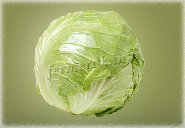 Поздняя капуста сахарная голова: характеристика и описание сорта, отзывы