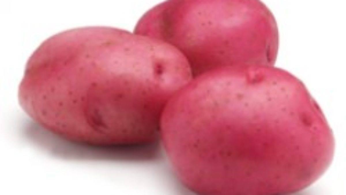 Перспективный сорт картофеля родриго