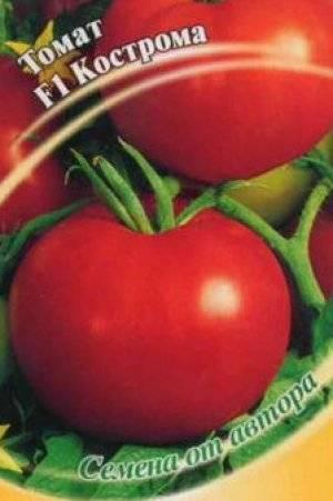 Томат кострома: описание и характеристика урожайного гибрида