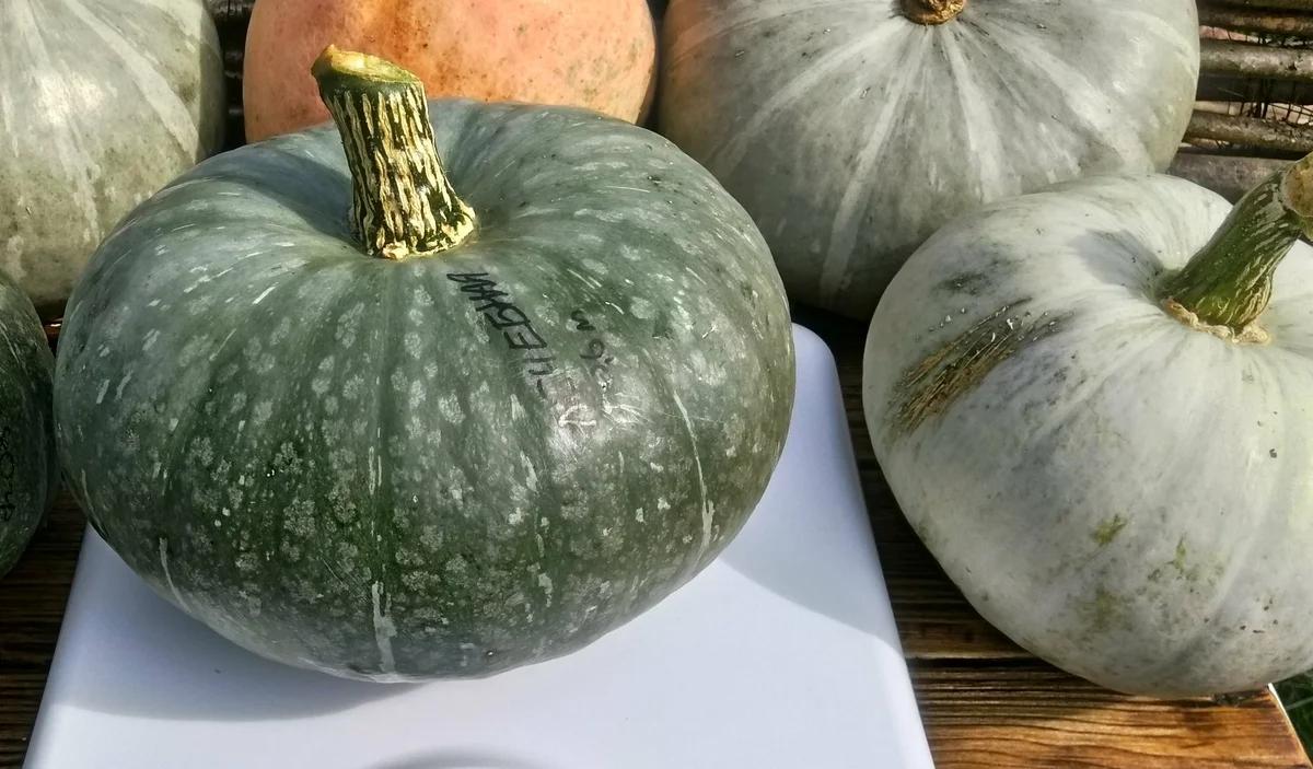Самые сладкие сорта тыквы 2018-2019. сорта тыкв с различным вкусом
