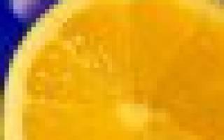 Ежевика сорт вождь джозеф: описание, фото, отзывы