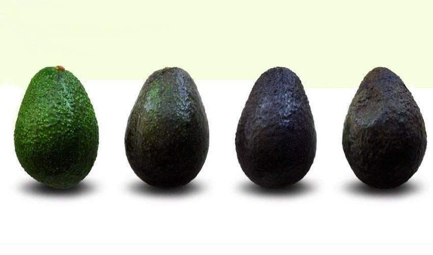 Как хранить авокадо: простые способы как в домашних условиях сохранить фрукт правильно (120 фото)