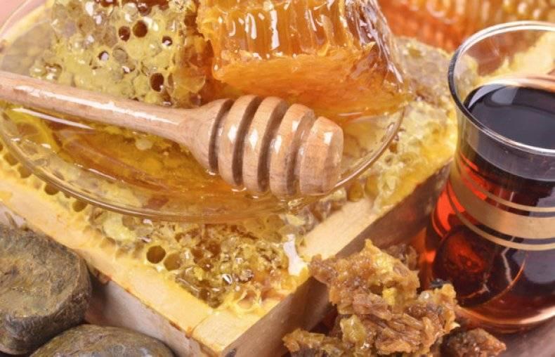 Мед с пергой: полезные свойства, как принимать