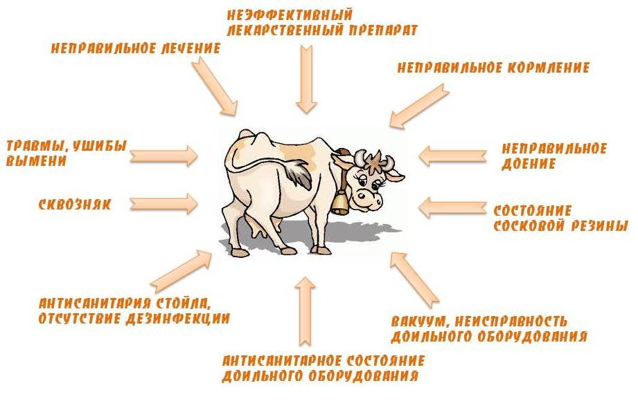 Гнойный мастит у коров. диагноз и лечение. |  ветеринарная служба владимирской области