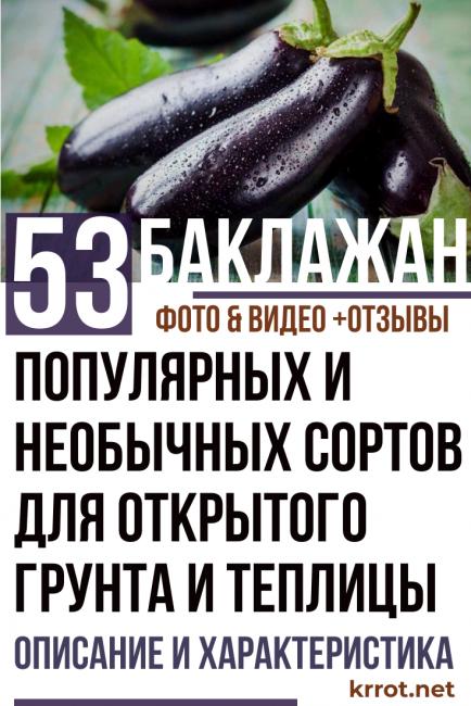 Сорта баклажанов: список и описание лучших сортов и видов
