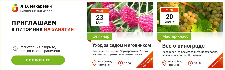 Малина сорт малиновая гряда: вкусный и высокоурожайный
